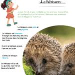Mini kit d'activités : Le hérisson