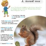 Mini kit d'activités : L'écureuil roux