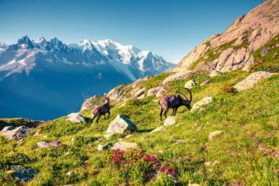 Animaux à la montagne