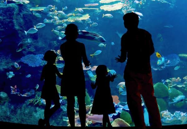 Aquarium en famille