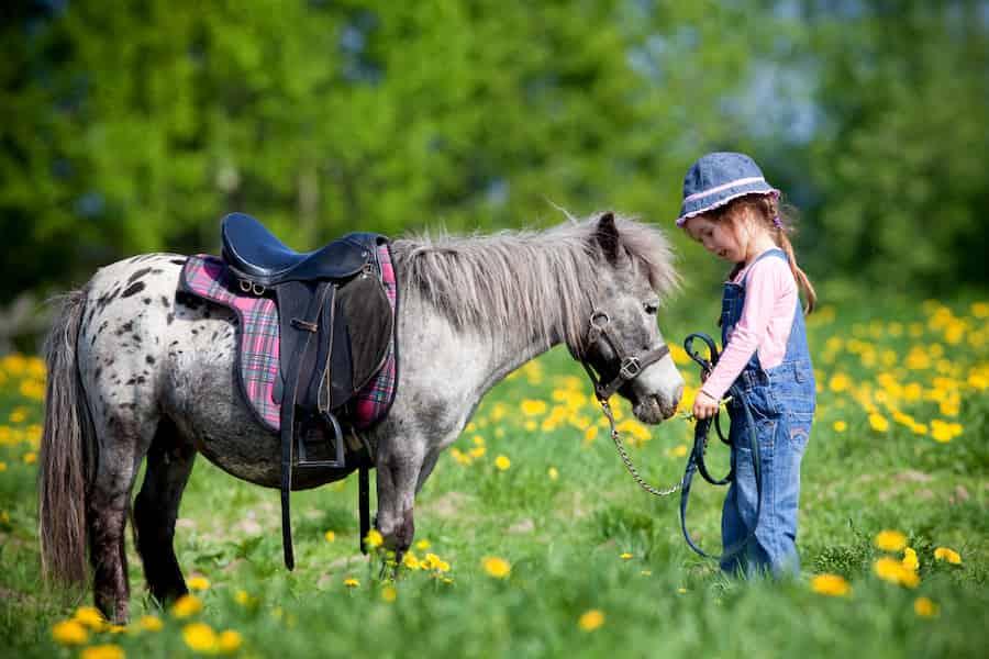 Visite Orléans poney pour enfants