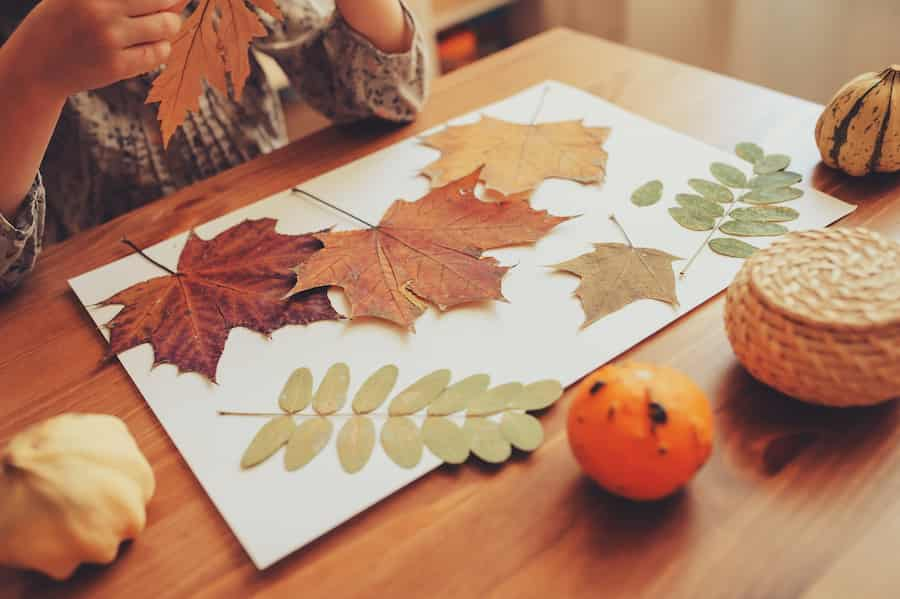 Herbier d'automne par un enfant