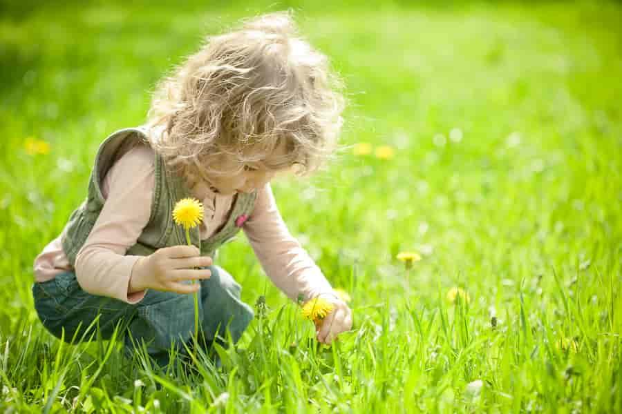 Faire un herbier : fleurs cueillies par les enfants